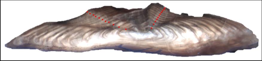 Figure 1. Otolith aged using break-and-bake method (11 years).